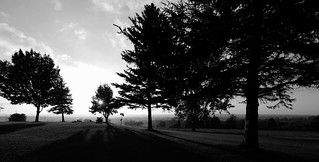 trees and mist (1)