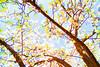 abstract cherry blossum port echuca (Michael Desimone) Tags: absract cherry blossom echuca victoria australia port steam power engine paddle steamers historic presinct flickr michael desimone photography art photoshop canon 7d 1020mm f35 latrobe university day trip holliday