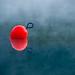 Water Radish