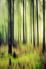 Moving Trees [Explored 28-09-2014] (frata60) Tags: trees tree nature netherlands forest bomen nikon nederland natuur d200 nikkor bos f28 drenthe odoorn