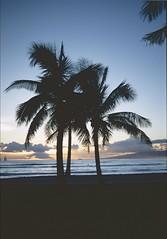 Hawai'i 1997 (patrikmloeff) Tags: world ocean voyage travel sunset sea usa holiday beautiful analog america palms island hawaii vacances reisen holidays meer sonnenuntergang unitedstates minolta state pacific waikiki oahu earth urlaub insel palmtrees american terre voyager honolulu analogue traveling waikikibeach monde amerika ferien palme palmiers palmier reise welt erde amerikanisch palmen pazifik ozean pazifischerozean thegatheringplace verreisen inselgruppe dersammelpunkt