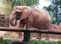 Image14 - Copia (Daniel.N.Jr) Tags: animal selvagem zoologico kodakz990