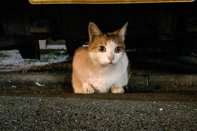 Today's Cat@2014-09-28