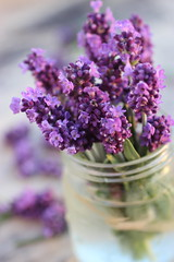 lavanda (stgio) Tags: flower purple lavender
