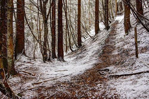 Stillness in the white forest