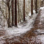 Stillness in the white forest thumbnail