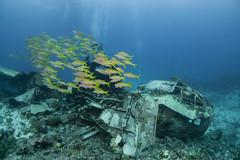 DSC02679 - betty - cockpit (montereydiver) Tags: sonya5100 truklagoon chuuk wreck shipwrecks underwater scuba ocean wrecks underwaterphotography betty bettybomber
