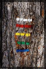 ... Suivre Le Bon Chemin ... (sabinelacombe) Tags: arbres pins paca provence bouchesdurhone marseille