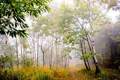 Luce magica (Marco Allegro) Tags: nature autumn fog forest tree lombardy italy