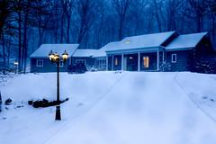 Long Cold Lonely Winter (Michael Bateman) Tags: bateman michael photography wildlife kinnelon newjersey unitedstates us