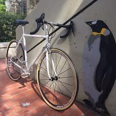 IMG_0134 (american_cyclery) Tags: soma somafab somastanyan lugged luggedsteel steelisreal prototype campagnoloveloce campagnolo
