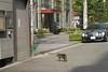 cat at Honmachi, Osaka, 2003 (jtabn99) Tags: city japan cat osaka honmachi chuouku