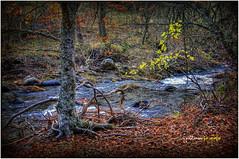 (0185/14) Madera viva (Pablo Arias) Tags: autumn trees espaa naturaleza nature photoshop spain colours arboles colores nikond50 otoo hdr texturas smrgsbord composicin photomatix hayedodemontejo tamron18250 olequebonito greatmanipulart grouptripod oltusfotos goldenvisions pabloarias