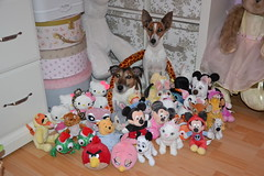 My little Baby Love and Teddy Collection ♥ (Girly Toys) Tags: my dogs mes chiens jack russell terrier fox à poil lisse smooth coat puppy toutous toutou collection plush peluche disney hello kitty little petshop minnie mickey le roi lion the king simba nala panpan thumper livre de la jungle book kaa marie les aristochats aristocats 101 dalmatiens lucky dalmatians winnie pooh tigrou stitch raiponce rapunzel pascal idefix angry birds volt nemo pluto bourriquet missliliedolly miss lilie dolly aurelmistinguette girly toys collectible girlytoys