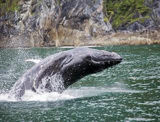 Alaska Salmon Fishing Lodge - Luxury 33