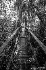 Jungle (Jol Bussard) Tags: noiretblanc contraste sentier chemin estavayerlacswitzerlandnature