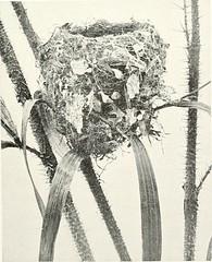 Anglų lietuvių žodynas. Žodis calamus australis reiškia <li>calamus australis</li> lietuviškai.