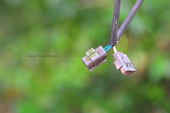disconnected (MailHamdi) Tags: green wire nikon bokeh sigma hobby malaysia electrical freelance connector perak villagelife kampunglife ismaelhma mailhamdi ismaelhmaphotography