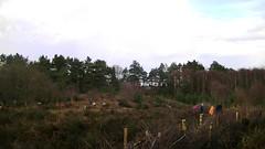 View across Purdis Heath