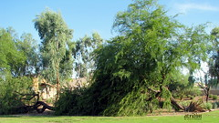 Arizona Monsoon Macroburst (atridim) Tags: arizona photo flickr widescreen monsoon 169 microburst mesquitetree chandlerarizona captainrick 16x9widescreen virtualjourney atridim macroburst