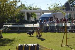DSC_0094 (Clube de Compo Hotel Fazenda para Ces) Tags: agility jundia estimaco clubedecompo clubedecompohotelfazendaparaces hotelfazendaparacesituclubedecompo