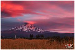 Mt Hood Sunset (No Stone Unturned Photography) Tags: sunset mountain colors field clouds oregon vineyard wheat mthood hood mounthood columbiarivergorge