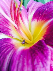 (hadleyminor) Tags: pink flower cool pretty ladybug bestpictureever