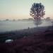4am fog