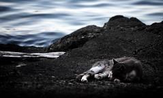 [ Chi dorme sogna pesci - Who sleeps maybe dreams of fishes ] DSC_0919.2.jinkoll (jinkoll) Tags: sleeping sea fish cat rocks waves peace dof bokeh scilla calabria scylla