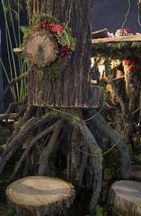 Singapore Garden Festival 2014 @ Gardens by the Bay (gintks) Tags: flower singapore orchids floraldisplay flowerdome singaporetourismboard gbtb gardenbythebay nparksbuzz sgf2014