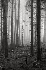 South Barrule (14) (cj_iom) Tags: blackandwhite mist nature canon walking photography walks scenic glen isleofman manx iom southbarrule ellanvannin canon1100d manxnationalglen manannanmaclirscloak manxbroth