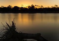 Eden Rise Lake (dlerps) Tags: longexposure trees sunset lake reflection tree nature water silhouette dusk sony sigma australia melbourne trunk berwick goldenlight lerps sonyalphadslr sigma1850mmf28exdcmacro edenrise sonyalphaa77v daniellerps