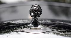 Jaguar (Ben Gun) Tags: park old cars car rain closeup 50mm buick alt f14 hamburg mascot oldtimer autos nikkor fordmustang regen stadtpark khlerfigur automobil jagua pisswetter nikond3000 hamburgerstadtpark hamburgerstadtparkrevival mincipal