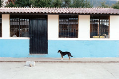 Perrito II (The Frotographer) Tags: life vacation amigos travelling southamerica children quito ecuador shadows chiquitos working happiness nios spanish learning teaching castellano otavalo cascada baos latinomerica