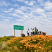 Cycling from the flowers of Namaqualand to Kaapstad