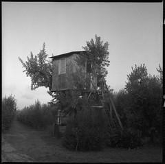 la casa sull'albero (m art) Tags: kodaktmax400 rollei35f altroquando m art
