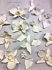 Sugar Orchids (David H. Chow - Pastry Chef) Tags: wedding orchid sugar decor croquembouche gumpaste pastillage chowtastic