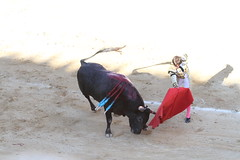 Antonio Barrera Bziers 2010 (louis.labbez) Tags: feria fete cape combat passe corrida toro temporada matador barrera taureau pe arnes bziers tauromachie levage muletta labbez torer