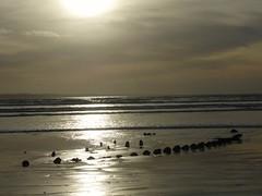 Epave.. Wreck... (alainpere407) Tags: alainpere plomodiern finistère penarbed bretagne brittany breizh epave wreck beach plage coucherdesoleil sunset