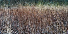 Rainbow (jswigal) Tags: columbus ohio park nature snow spring winter season seasons osu prairie oak oaks metro outdoors outside intimate landscape tree plant grass white grey blue red green orange cool sony alpha a7r a7 ilce minolta rokkor