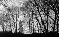 Domtoren (Daniel Zwierzchowski) Tags: domtoren black white trees bnw blackandwhite bw architecture landscape utrecht netherlands holland canon t2i rebel travel natgeotravel natgeo park 50mm eos550d eos 550d monochrome tree