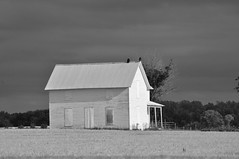 Flaky BnW (StBrigidofOz) Tags: house abandoned wheat stormy vacant kansas homestead vulture