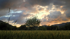 Very scenic sunset (VillaRhapsody) Tags: sunset summer tree field rural evening cloudy dusk challengeyouwinner cyunanimous
