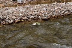2014_Bihar_csaldi_1184 (emzepe) Tags: creek river vale val valley tal kirnduls fleuve roumanie apuseni nyugati bihar 2014 patak nyr rumnien jnius csaldi judetul bihor hegyek bihari muntii flus hegysg foly galbena ves megye romnia kzs vlgy erdlyi krs vlgye kves galbina szigethegysg kzphegysg karszthegysg elsllyedt