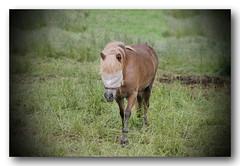 22W2014 le cheval aveugle