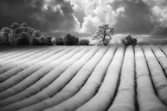 Kingdom (Russ Barnes Photography) Tags: summer storm nikon lavender cotswolds infrared d800 720nm russbarnes nikkor70200mmvrii