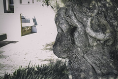 magic tree (Francescavcr) Tags: wood old italy man tree green nature magic illusion 2014 illusionism