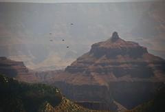 bright angel birds _ north rim _ v1 orig (meg99az) Tags: arizona birds grandcanyon northrim brightangelcanyon isistemple artvariation
