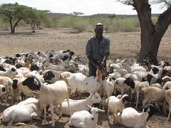 Animal Health - North Kenya (EU Civil Protection and Humanitarian Aid) Tags: animal warning early health drought deworming