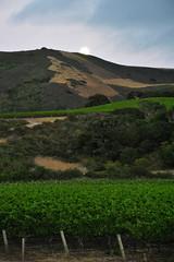 Moonrise (papajoesm) Tags: moon vineyard moonrise sanford califor staritahills supermoon